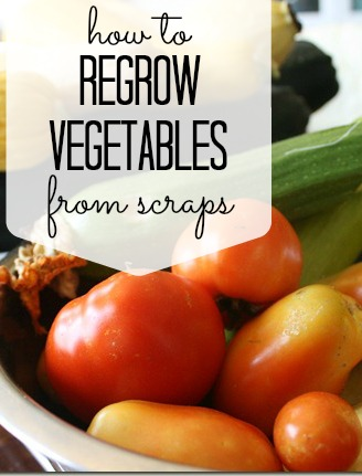 How To Regrow Vegetables From Scraps via Tipsaholic.com