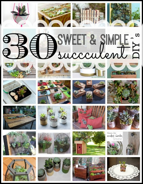 30 Sweet and Simple Succulent DIY's - Tipsaholic.com #gardening