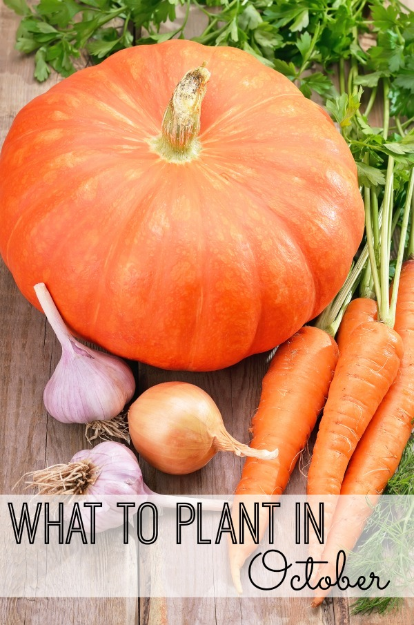 Get creative in the garden this fall. Check out what you can plant in your garden in October via @tipsaholic #gardening #october #plants