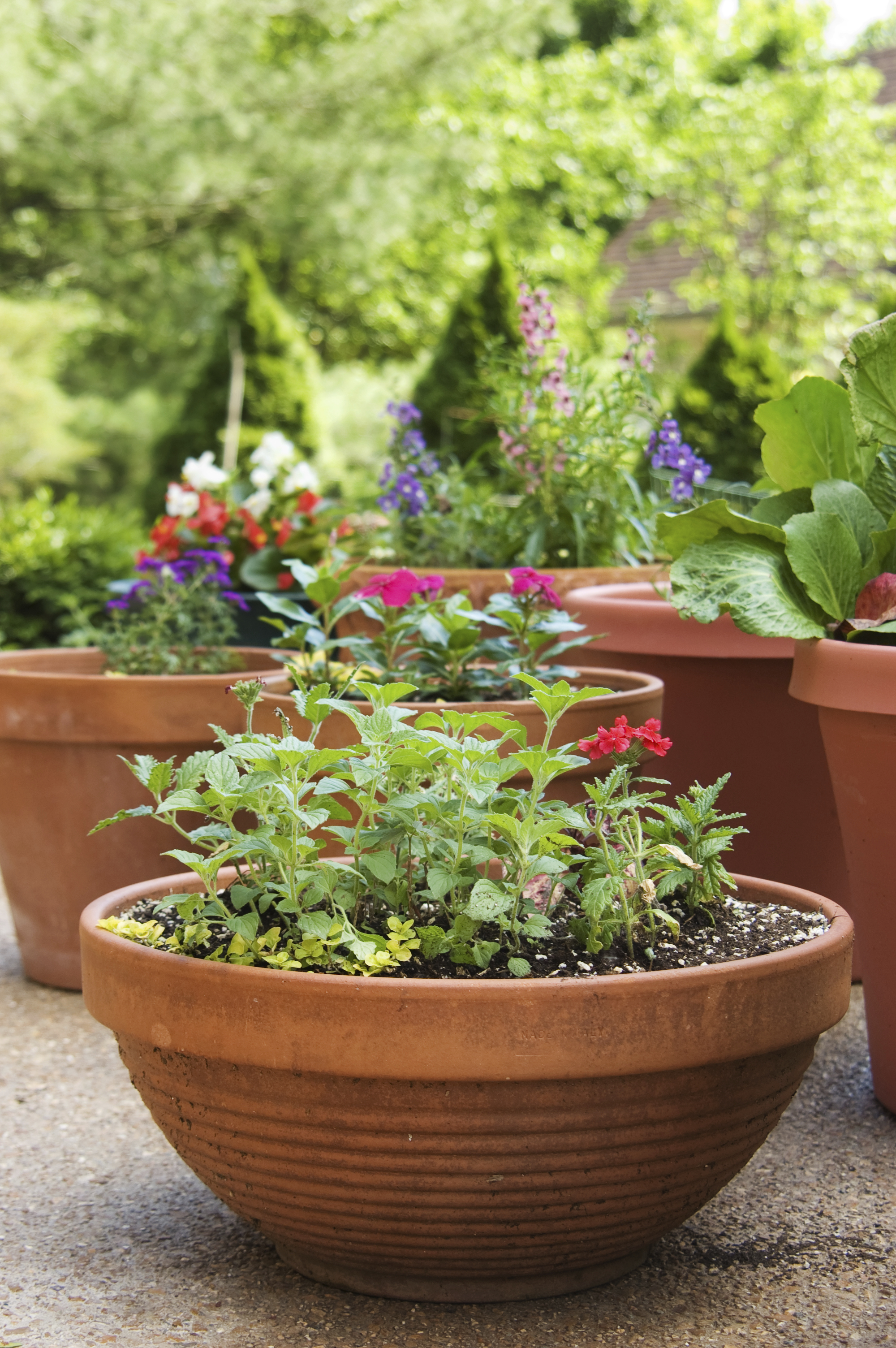 Remodelaholic | How to Create the Perfect Container Garden