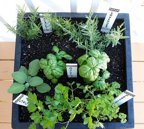 Container gardening is perfect for homes with small or nonexistent backyards, cold climates, and renters. Here are 9 tips for container gardening! 9 Tips for Container Gardening via @tipsaholic #gardening #containers #containergardening #garden